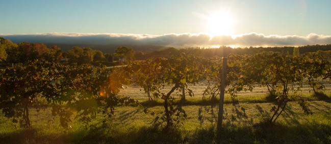 Sunrise over the vineyards at Hunt Country Vineyards