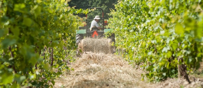 Caring for the soil at Hunt Country Vineyards